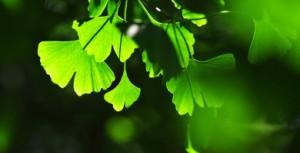 leaves_small.jpg
